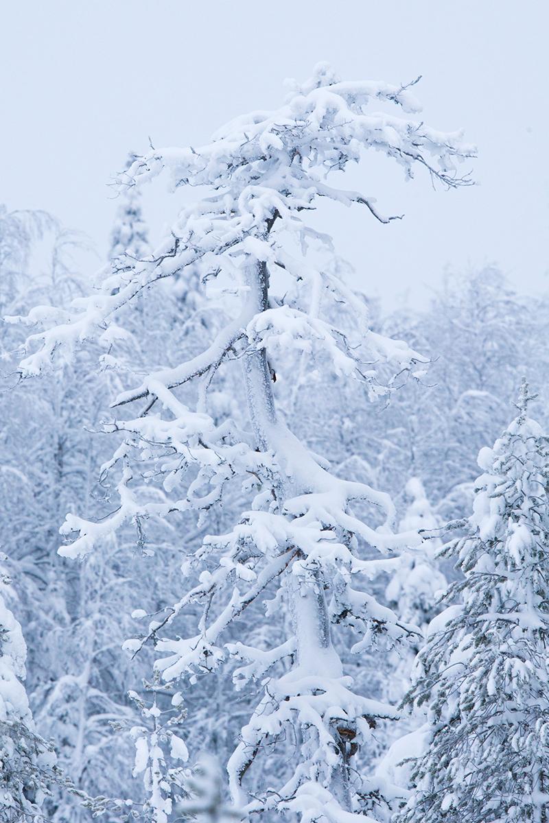 Konttainen, Soome